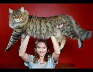 cat enormous