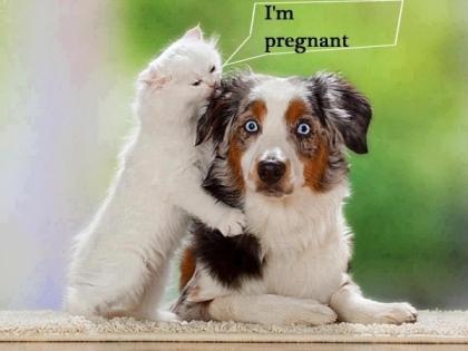 I'm Pregnant
