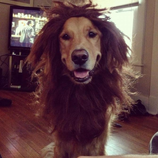 The Lion Dog Wig