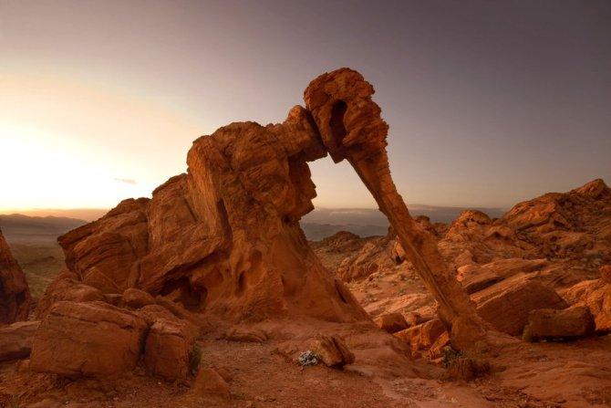 Elephant rock Nevada USA
