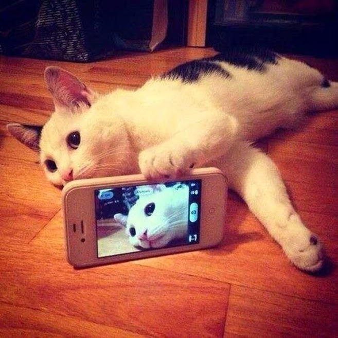 Cat Taking a Selfie With an Iphone