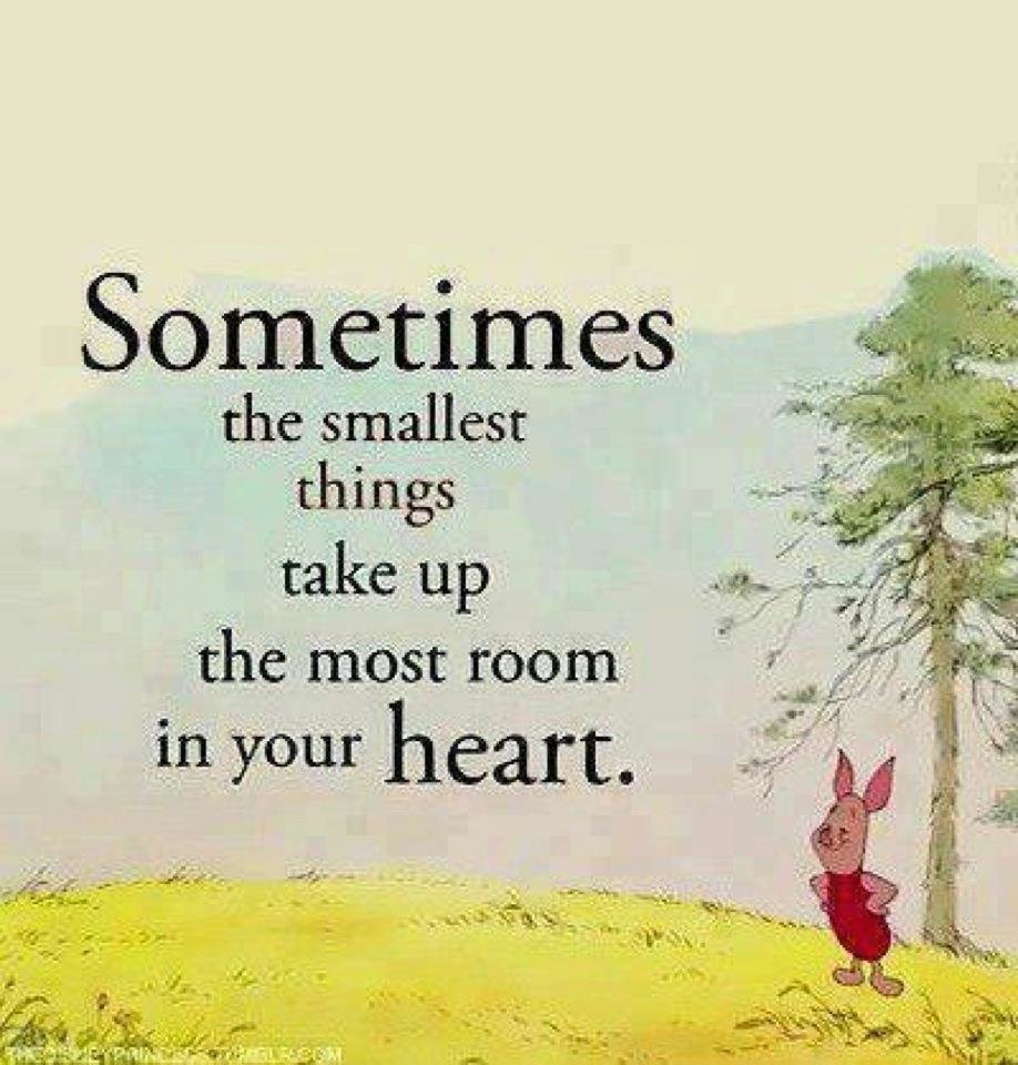 Winnie The Pooh Quotes Sometimes The Smallest Things: Life Lessons From Winnie The Pooh: Part 1