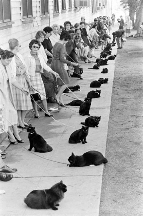 Audition for Black Cats in Hollywood in 1961