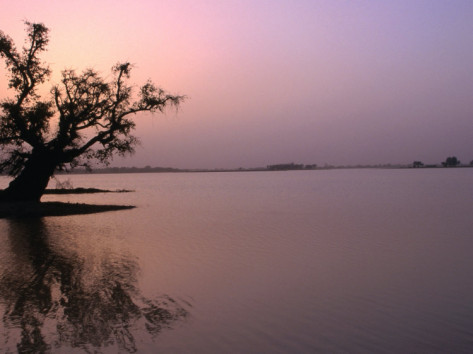 Lake Chad in Niger - Africa