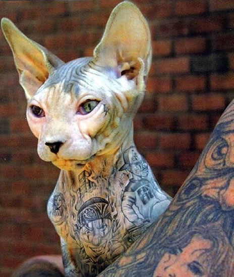 Cat With Tattoos