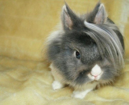 Rabbit Hairstyle