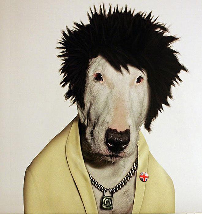 Costume Dog