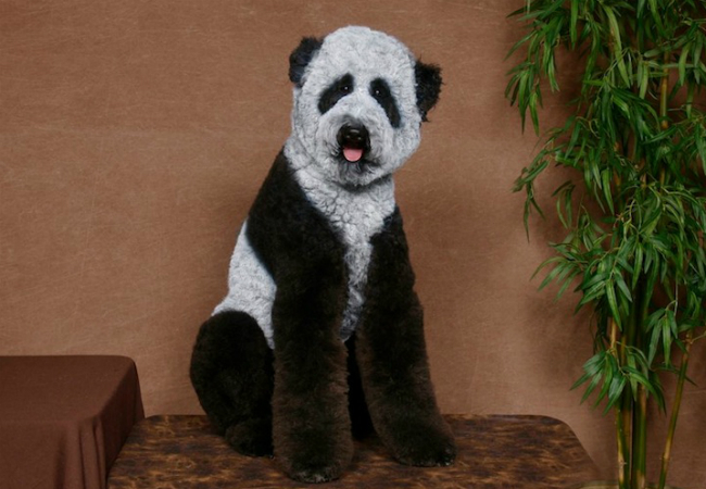 Dog Dressed up Lika a Panda