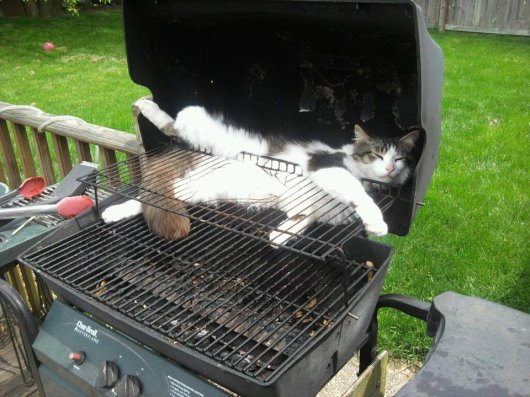 Cat Sleeping in a BBQ