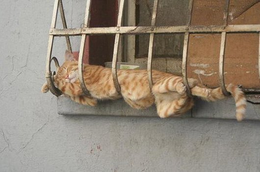 Sleeping cat hanging