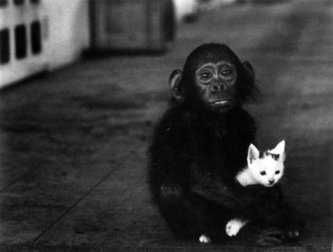 Monkey with a cat