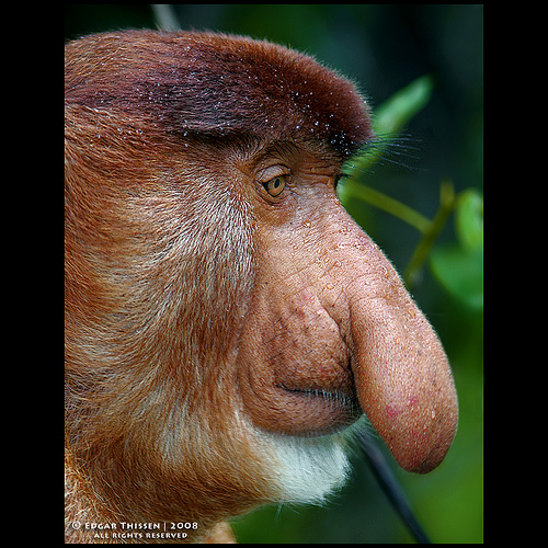Weird Animals With Big Noses 2