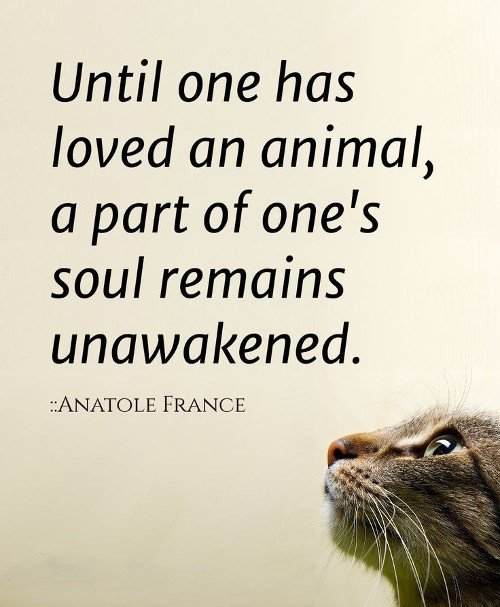 10 Amazing Quotes About Animals and Love | Cristina\'s Ideas