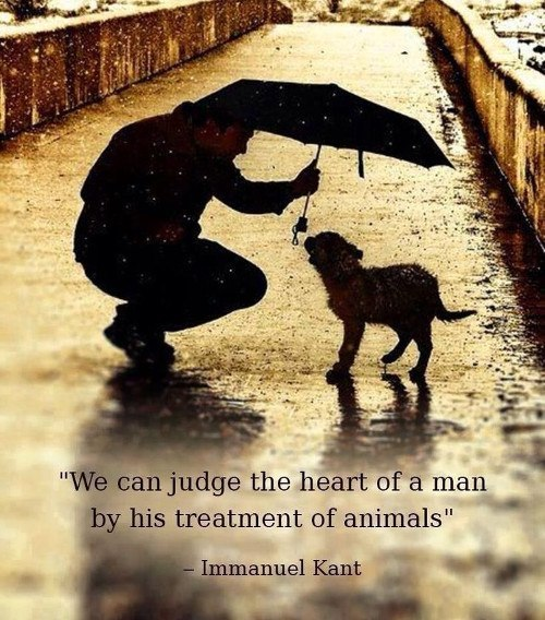Love Animals Quotes Gorgeous 48 Amazing Quotes About Animals And Love Cristina's Ideas