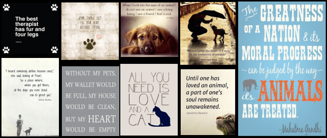 quotes about the love between people and their pets