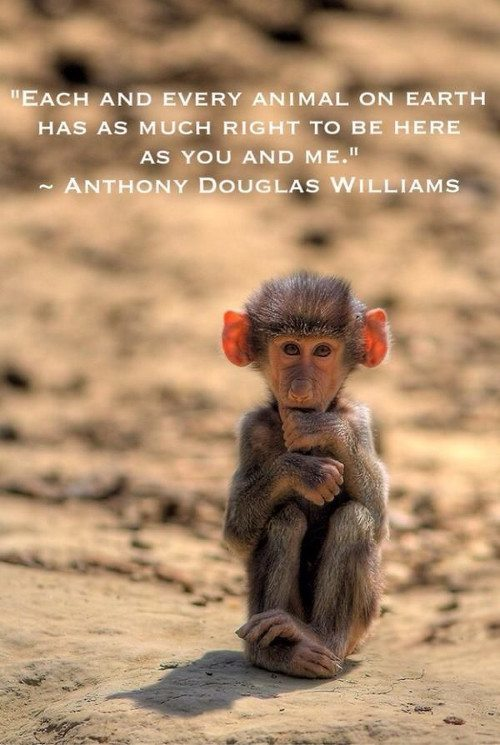quote about monkeys