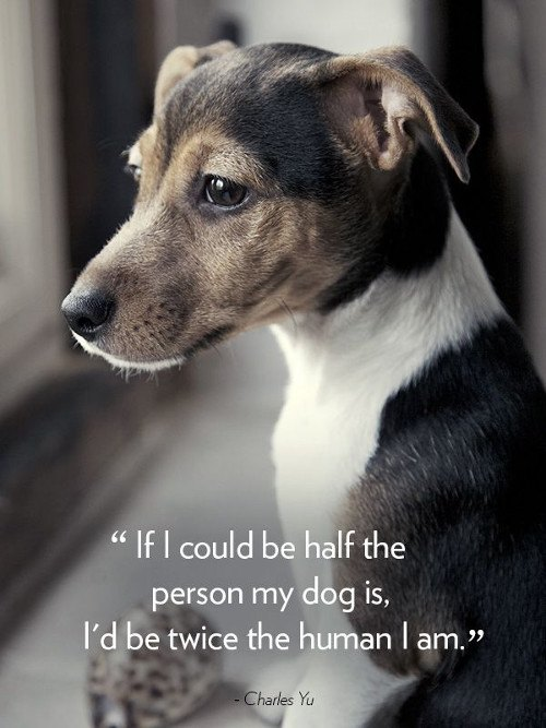 quote about dogs and friendship